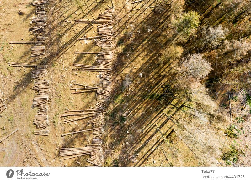 Fallen forest. Forest felled felled forest trees Bark-beetle Climate change from the air Aerial photograph Hot Nature Sun Shadow