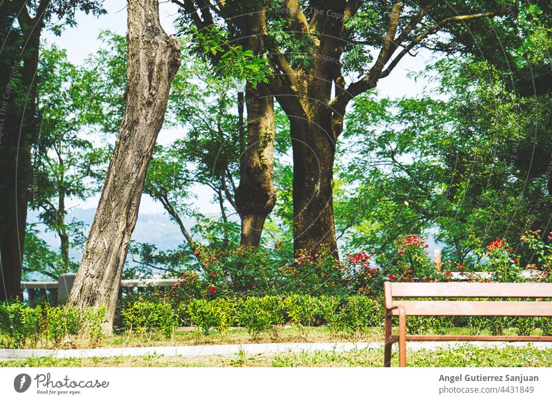 Bench seat to sit when you are tired in the middle of the trees Seat Trees Middle Green Park bench Relaxation Wooden bench Break Garden Calm Seating Sit Nature