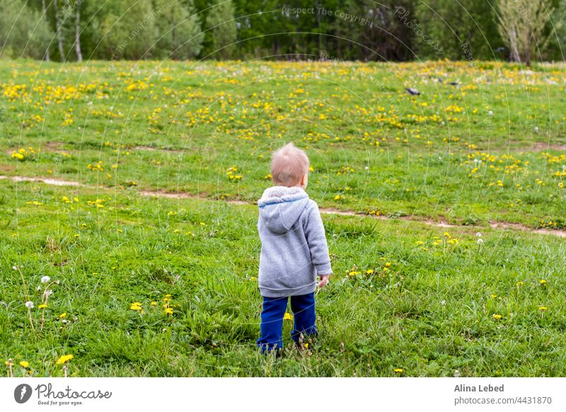 A cheerful kid walks in the field with dandelions. boy toddler healthy caucasian baby beautiful child childhood cute fun grass green happiness happy joy little