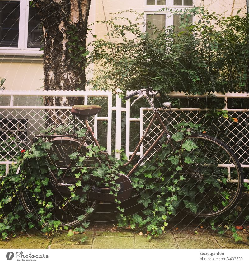Climate Neutral Bicycle climate reversal Ivy Forget Exterior shot Deserted Colour photo Day Old Means of transport Leisure and hobbies Fence Residential area