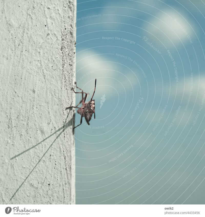 Extend sensor Insect Animal 1 Near Small Patient Calm Sunbathing Serene Caution Observe Colour photo Exterior shot Close-up Detail Deserted Copy Space right