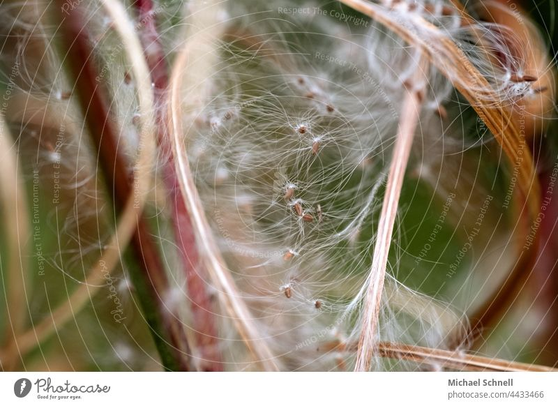 Macro image: Fine hairs and seeds of a plant Plant Delicate Tiny hair Macro (Extreme close-up) Detail White Soft Summer Easy Close-up Nature Ease Sámen Smooth