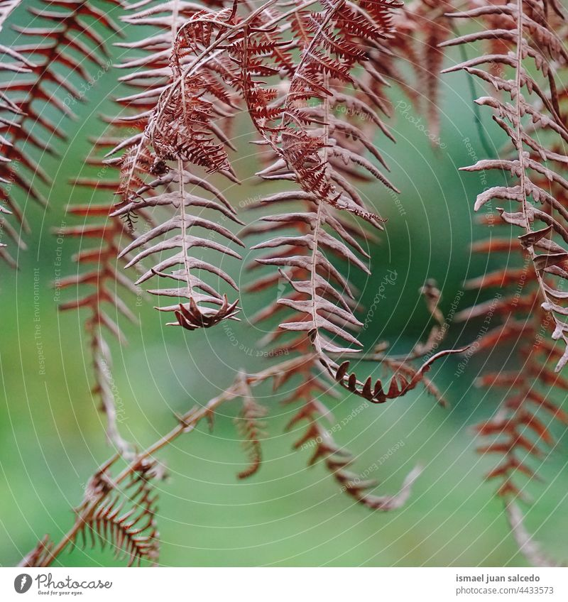 brown fern leaves in autumn season plant leaf abstract texture textured garden floral nature decorative outdoors fragility background natural autumn leaves