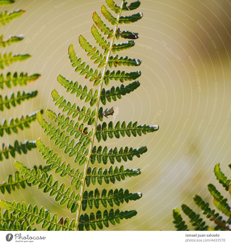 green fern leaf in springtime plant leaves abstract texture textured garden floral nature decorative outdoors fragility background natural