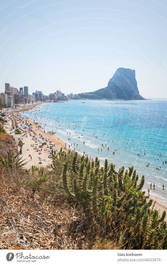 Cactus in front of sand beach with tourists for leisure along coastline of Calpe, Costa Blanca, Spain sea aerial calpe water cactus summer nature costa blanca