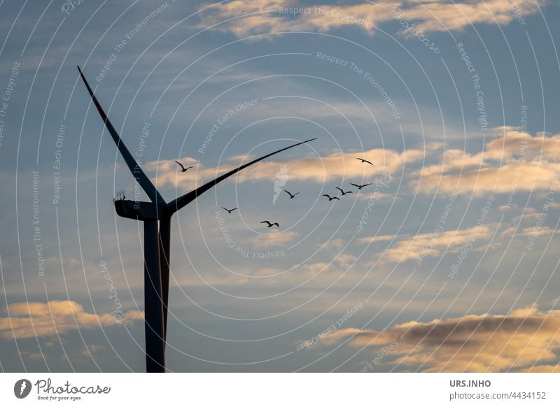 The birds fly high above in cloudy skies close to the rotor of the wind turbine wind power Wind energy plant Sky Renewable energy Energy industry Electricity