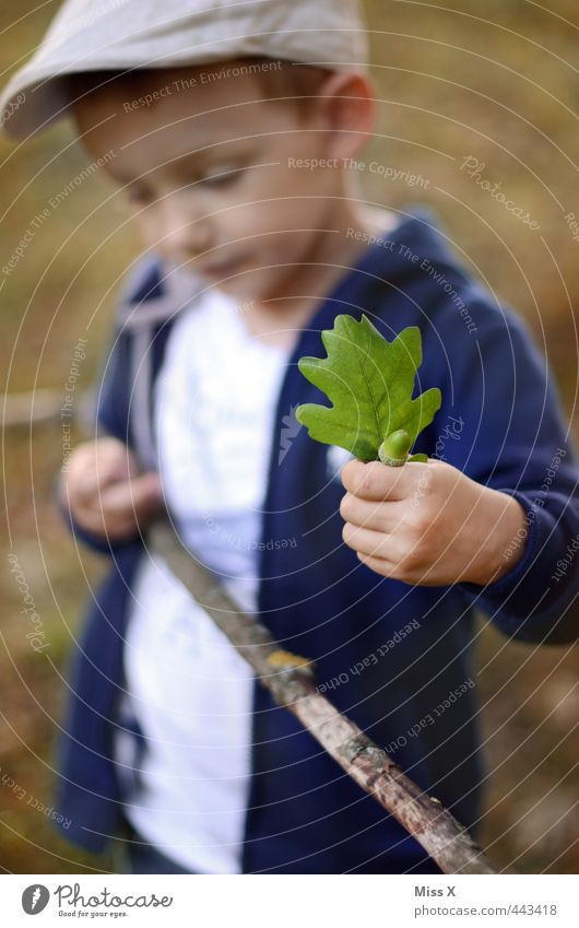 autumn is coming Human being Child 1 3 - 8 years Infancy Autumn Leaf Forest Cute Autumn leaves Acorn Oak leaf Collection Exterior shot Automn wood Stick Branch