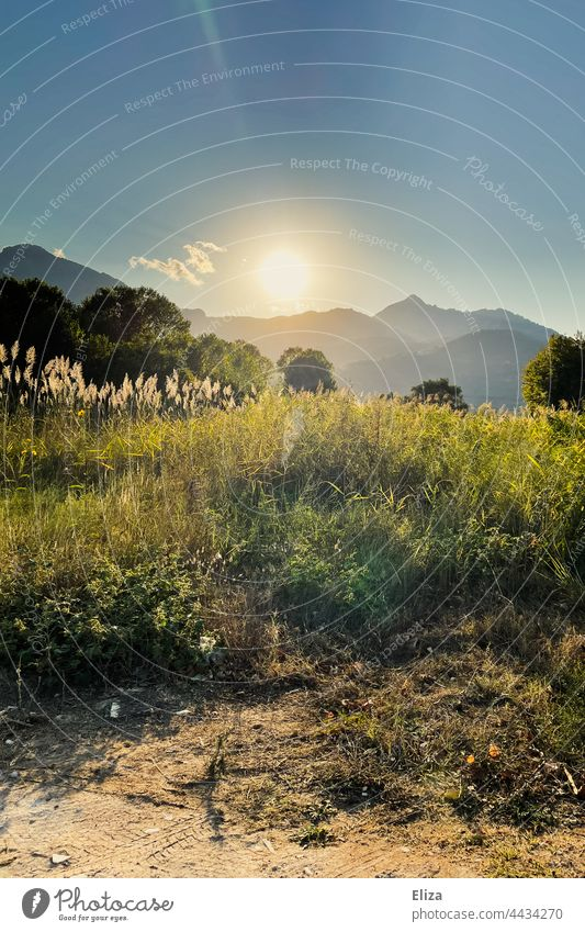 Landscape, meadow, trees and mountains in the evening sun Evening sun Back-light Sunlight Meadow Nature sunshine Idyll warm Sunbeam Beautiful weather