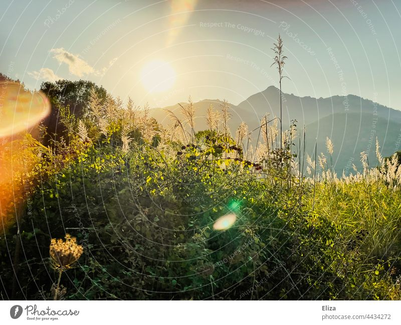 Landscape, meadow, trees and mountains in the evening sun Evening sun Back-light Sunlight Meadow Nature sunshine Idyll warm Sunbeam Beautiful weather Light