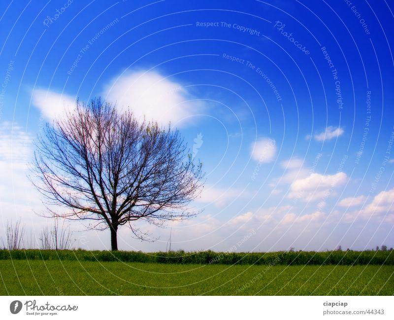 tree Tree Clouds Horizon Grass Sky