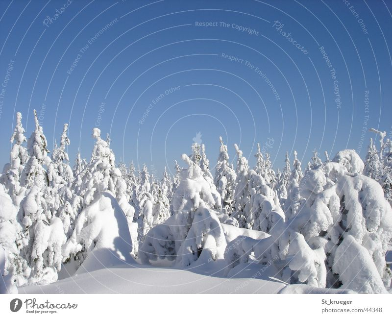 Winter silence Erz Mountains Forest Snow