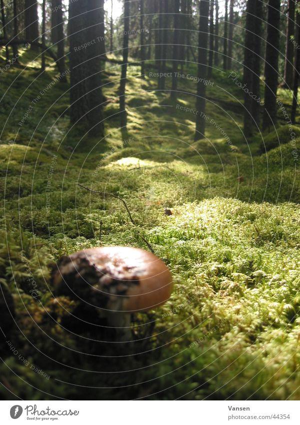 Tree Forest Mushroom