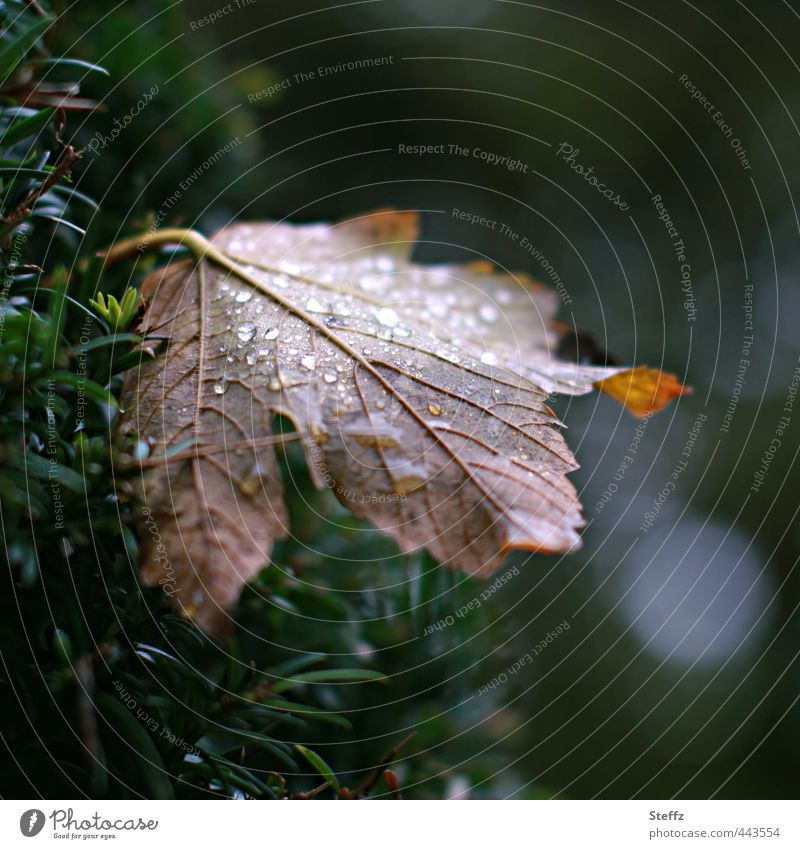 Nature Old Plant Loneliness Leaf Forest Sadness Autumn Senior citizen Rain Weather Gloomy Wet Transience Change Past