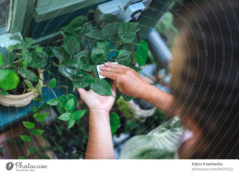 Woman wipes dust from plant leaves care taking care hand flower garden nature woman gardening flowers tree people hands leaf beauty spring gardener agriculture