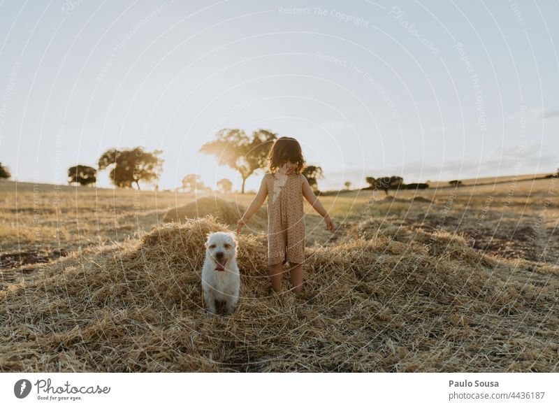 Cute girl playing in the fields with dog Child Girl Authentic Summer Dog Pet cute Happy Colour photo pet animal Animal Together Friendship Lifestyle together