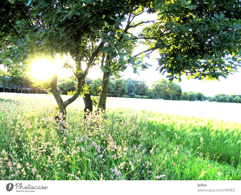 Sun Tree Grass Esthetic Branch Hope Tree trunk Belief Twig Optimism Cornfield Wheat Wheatfield