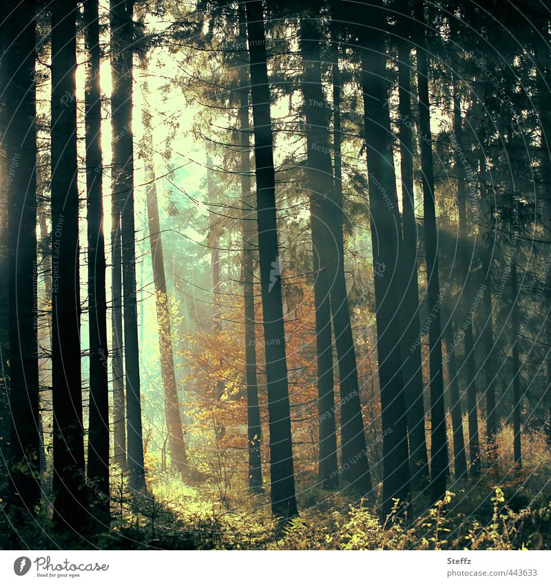 magic light and silence in the forest Automn wood Flare Forest Light in the forest forest bath Mood lighting magical Mysterious atmospheric Cloud forest