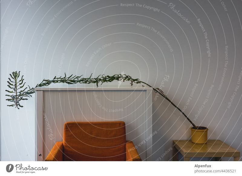 ...and everything strives towards the light Houseplant Armchair Living or residing grow to light Plant Decoration Flat (apartment) Window Deserted Window board