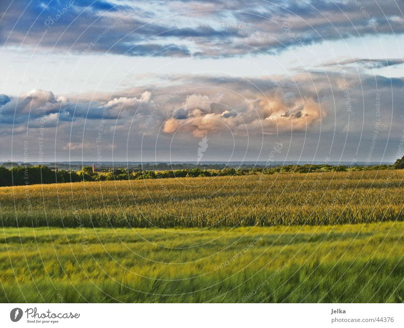 Blue Green Landscape Clouds Gray Pink Weather Grain Dusk Thunder and lightning Cornfield Storm clouds Barley Evening sun Barleyfield