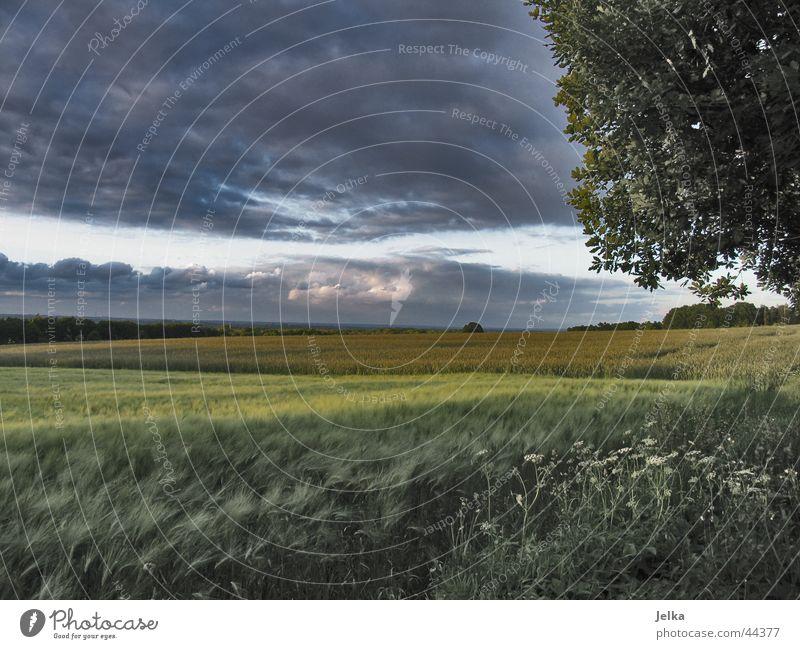 Tree Landscape Clouds Dark Field Grain Cornfield Storm clouds Barley Barleyfield