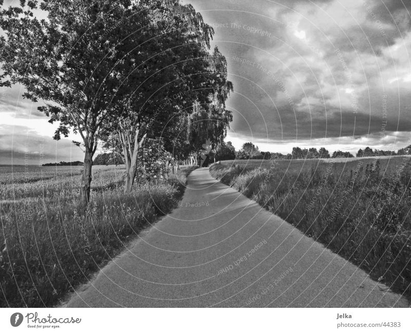 The way to happiness Clouds Storm clouds Tree Grass Field Forest Street Lanes & trails Dark Cornfield Wheatfield Asphalt Grain Black & white photo