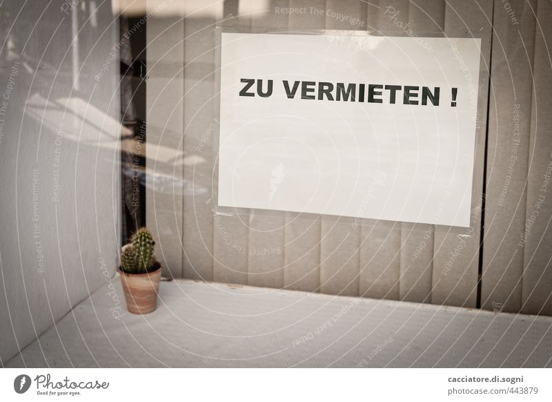 Cactus - for rent Decoration vertical blind Pot plant Store premises Window Shop window Piece of paper Signs and labeling Characters Simple Funny Thorny Thrifty