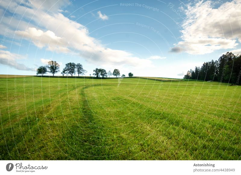 up in the meadow Meadow Green Nature Landscape trees Row of trees Forest Grass wide Sky Clouds Wide angle White Blue Dark Above Agriculture mill district off