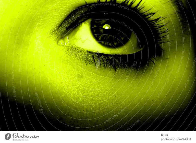 eye Face Woman Adults Eyes Yellow Green Eyelash Pupil Greeny-yellow Detail Shadow Looking