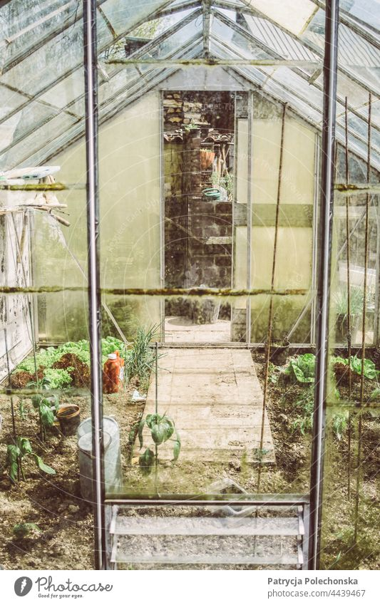 Small old glass greenhouse with vegetables growing in it Greenhouse Glass Old Rural farming Garden Shed Cultivation cultivating