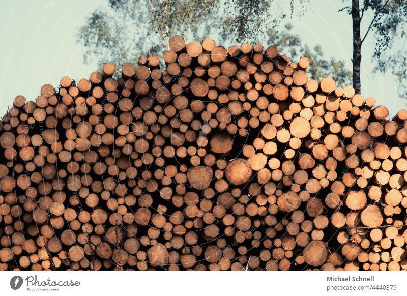 Log pile Tree trunk Forest Environment tree trunks Forestry Logging Forest death Climate change Bark-beetle Destruction Wood
