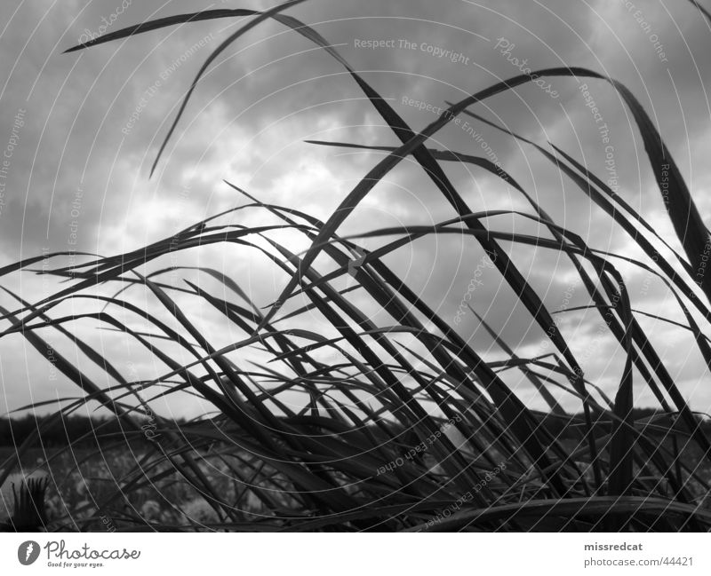 stormy field Gale Field Meadow Grass Clouds Gray Storm Plain Passion Black & white photo Nature Landscape Plant