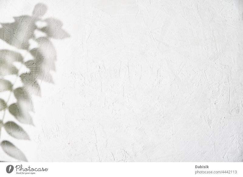 Leaf shadow on white background. Creative abstract background leaf leaves plant tree foliage texture light design nature branch pattern sunny wall sunshine