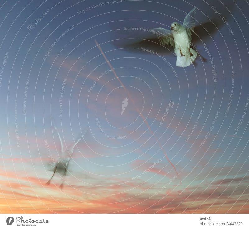 capers Animal portrait motion blur Seagull Gull birds 2 Flying Movement Wild animal Speed Curiosity Joie de vivre (Vitality) Endurance Ease Friendship Judder