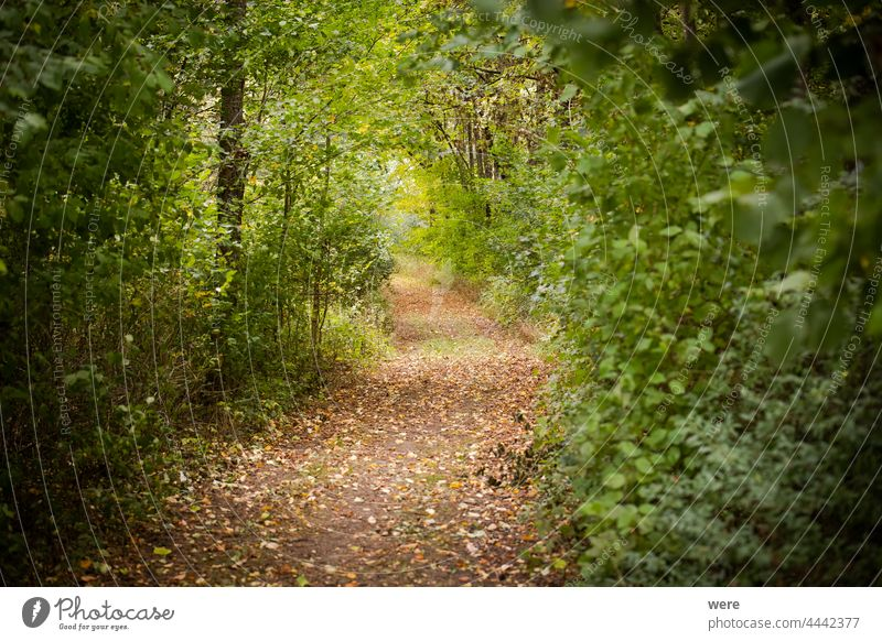 Forest with autumnal colored leaves autumnally colorful branches copy space forest landscape meadow nature nobody outdoors scenery season tree trees