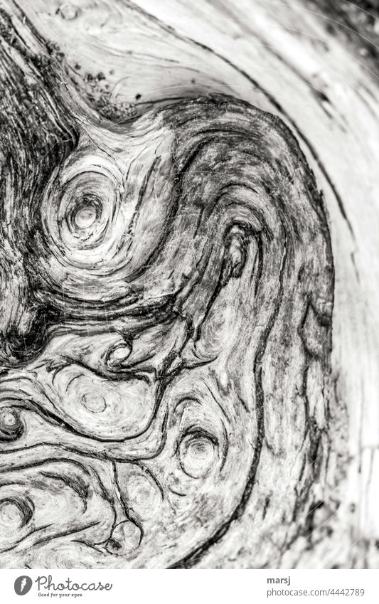 Gnarled piece of wood. Old and weathered. Wood Nature Authentic Uniqueness naturally Contrast Structures and shapes Abstract Pattern Weathered Patina Headstrong