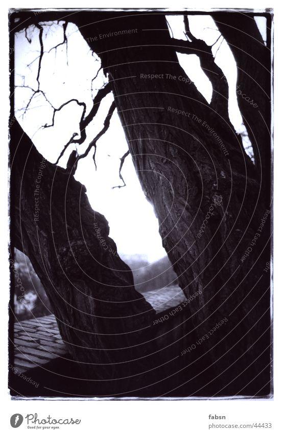 White Tree Black Mountain Wall (barrier) Branch Tree bark Wood grain