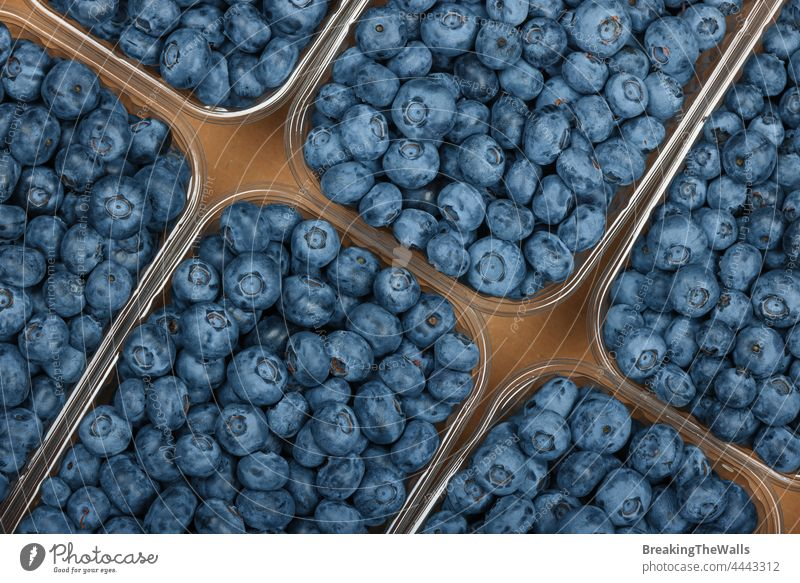 Close up fresh blueberry in container Blueberry berries box plastic carton cardboard brown closeup fruit produce food ripe retail display harvest crop