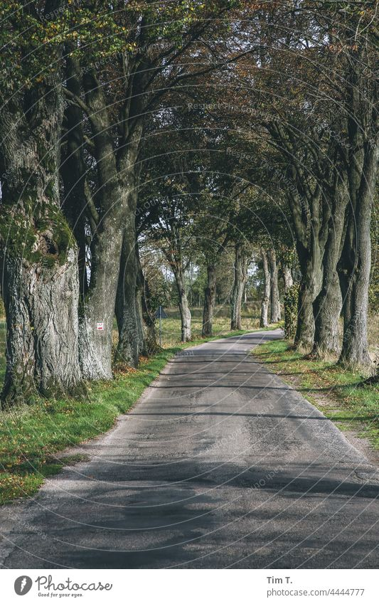 an old avenue in Poland in autumn Street Avenue Autumn Colour photo Landscape Tree Nature Deserted Lanes & trails Exterior shot Country road Central perspective