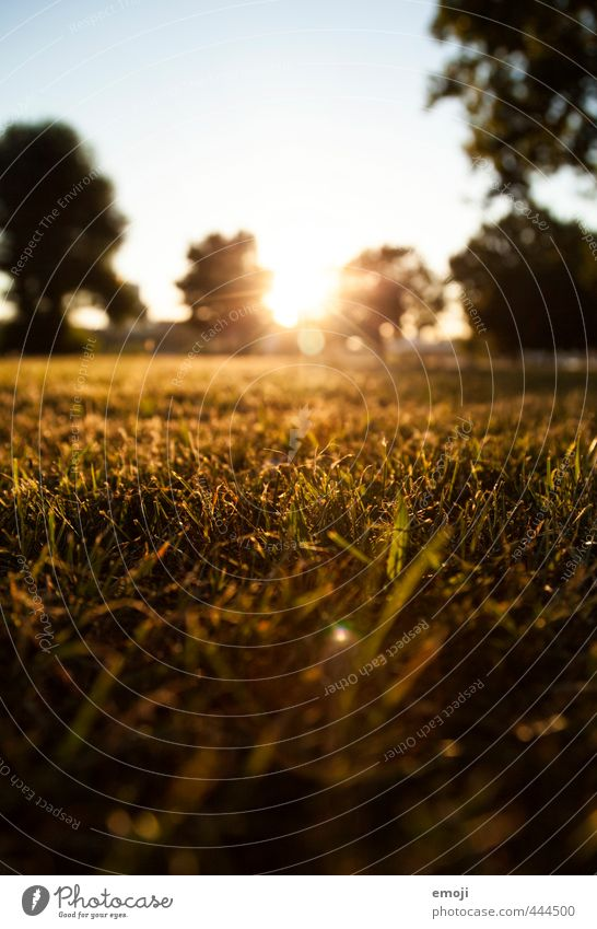 Evening hour has gold in its mouth Environment Nature Landscape Summer Grass Meadow Natural Green Colour photo Exterior shot Deserted Twilight Sunlight Sunbeam