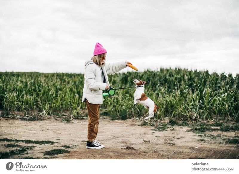 Cheerful teenage girl playing in the field with her dog Jack Russell Terrier on the background of a corn field in autumn teenager jump pink terrier childhood