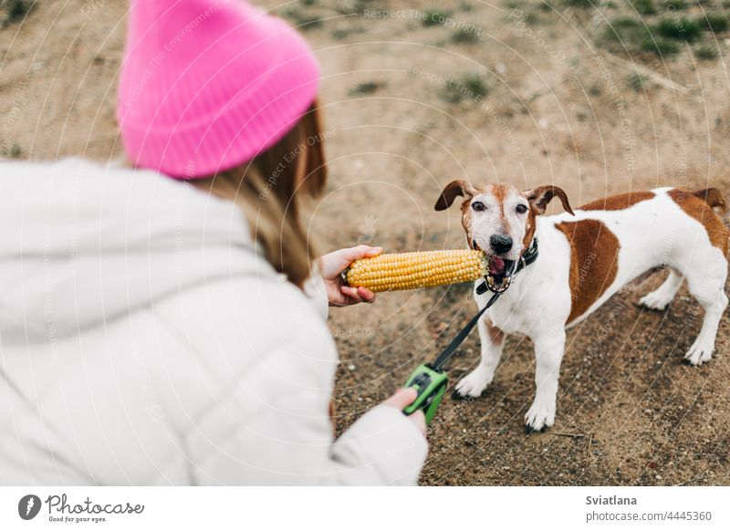 Happy teenage girl hugging and feeding her dog Jack Russell Terrier in a field against the backdrop of a cornfield in autumn teenager pink terrier childhood pet