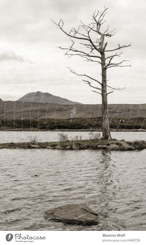 lost landscape III Vacation & Travel Trip Adventure Nature Landscape Tree Hill Lake Hole Assynt Great Britain Scotland Europe Calm Transience Subdued colour