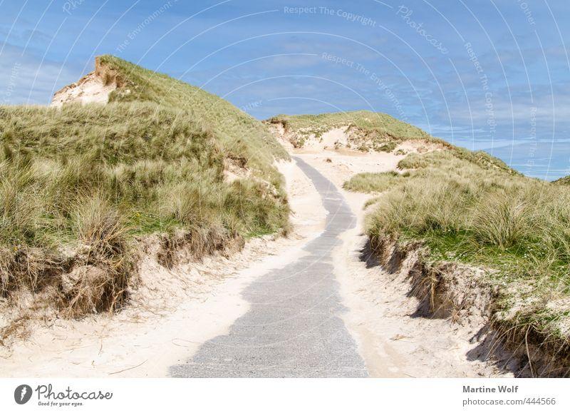 The Dunes Vacation & Travel Trip Summer Summer vacation Beach Nature Landscape Sand Marram grass faraid head Scotland Great Britain Europe Street Lanes & trails