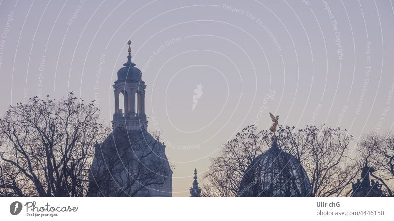 """Dresden, Saxony, Germany: Silhouette of the domes of Frauenkirche Church and Academy of Fine Arts (""""Kunsthochschule"""") and trees full of crows in the twilight of the evening."""