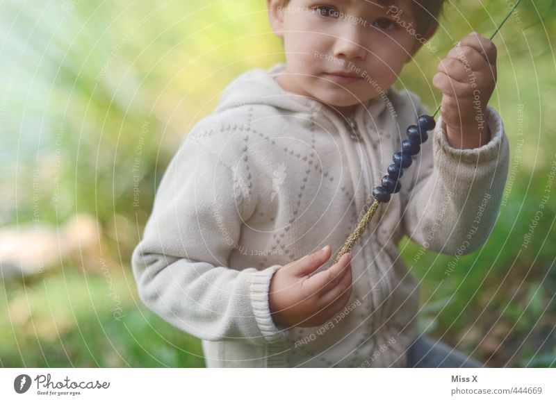 Human being Child Nature Summer Forest Autumn Healthy Eating Boy (child) Playing Small Food Leisure and hobbies Fruit Infancy Nutrition Cute