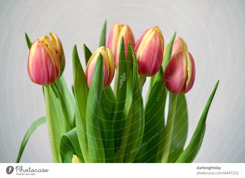 Tulips bouquet tulips Flower Blossom Interior shot Colour photo Decoration Bouquet floral Beige Green Violet Limp in the aftermath of interior inboard withered