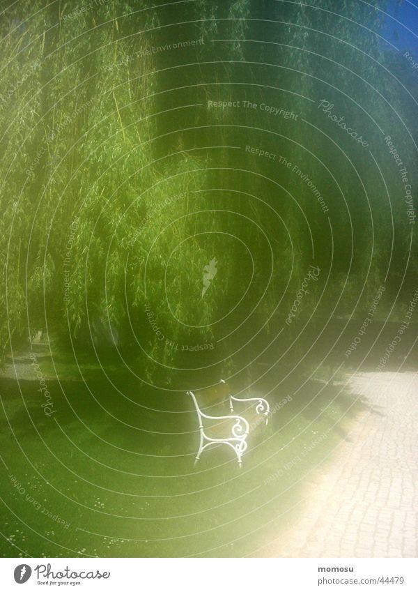 in my dreams Dream Impression Romance Garden bench Tree Bench Pasture Blur