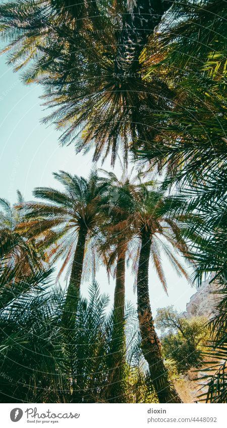 Preveli Beach palms Palm frond Palm beach Greece Crete vacation Vacation mood Vacation photo Vacation destination Vacation & Travel Palm tree Sunlight
