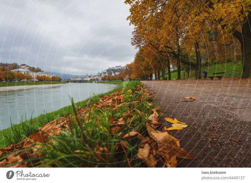 Autumn leaves covered path along the Salzach river with view of the old town of Salzburg, Austria River Tree To fall foliage Nature Town Leaf Landscape Outdoors