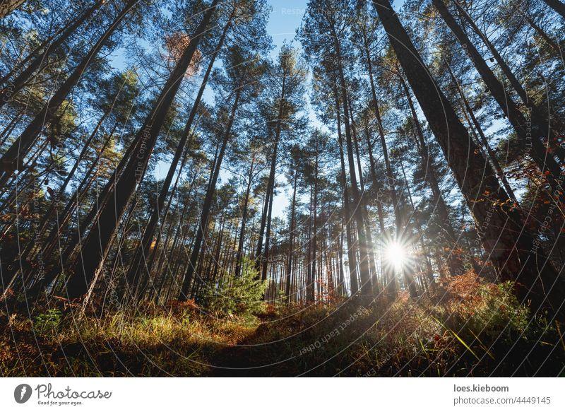 Last sun shining trough the pine forest during autumn, Tirol, Austria mountain tree alps fall tirol nature landscape sun star woods outdoor season environment